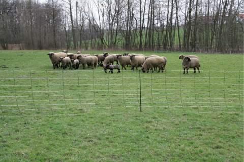 filet mouton minus plus x3. Black Bedroom Furniture Sets. Home Design Ideas