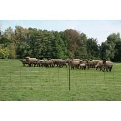 Filet mouton minus plus X3