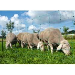 Filet mouton ovinet vert