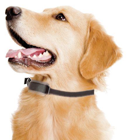 Cloture �lectrique invisible pour chien Ako